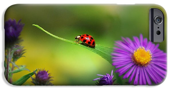 Ladybug iPhone Cases - Single In Search iPhone Case by Christina Rollo
