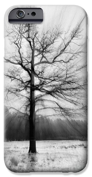 Fog Mist iPhone Cases - Single leafless tree in winter forest iPhone Case by Iryna Irkin