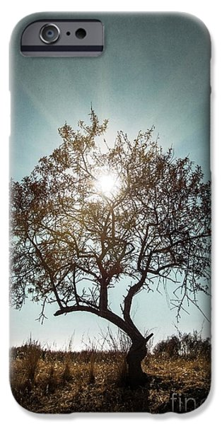 Shadow iPhone Cases - Single Tree iPhone Case by Carlos Caetano
