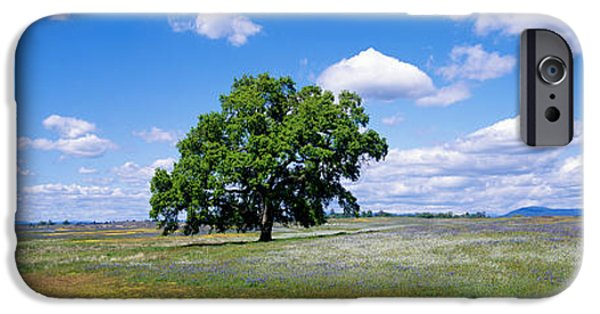 Meadow Photographs iPhone Cases - Single Tree In Field Of Wildflowers iPhone Case by Panoramic Images