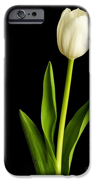 Single White Tulip Over Black iPhone Case by Edward Fielding