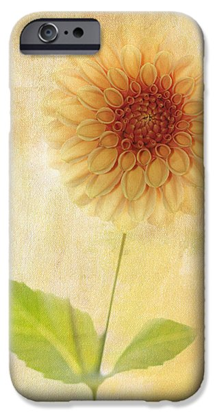 Symetry iPhone Cases - Single Yellow Dahlia iPhone Case by Rebecca Cozart