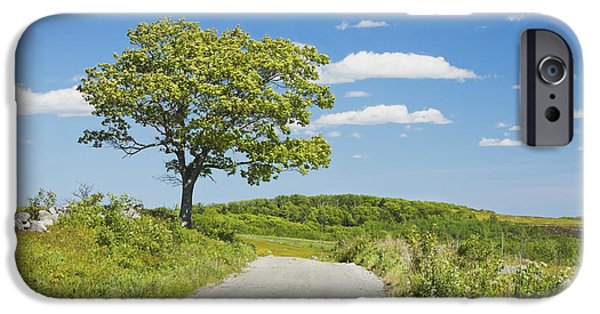 Rural Maine Roads iPhone Cases - Sinlge Tree And Dirt Road  In Spring Blueberry Field Maine iPhone Case by Keith Webber Jr