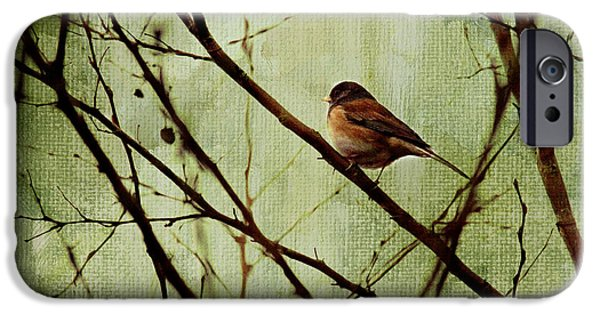 Birds iPhone Cases - Sittin In A Tree iPhone Case by Rebecca Cozart