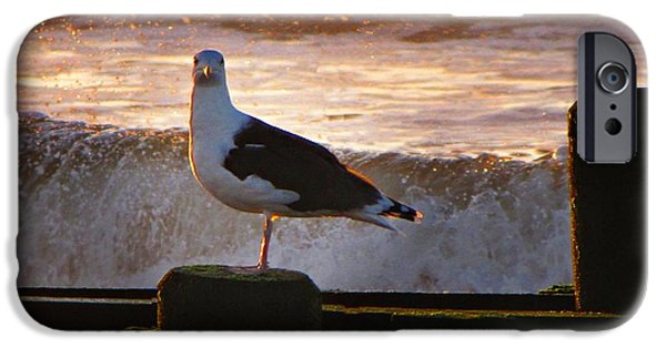 Seagull iPhone Cases - Sittin On The Dock Of The Bay iPhone Case by David Dehner