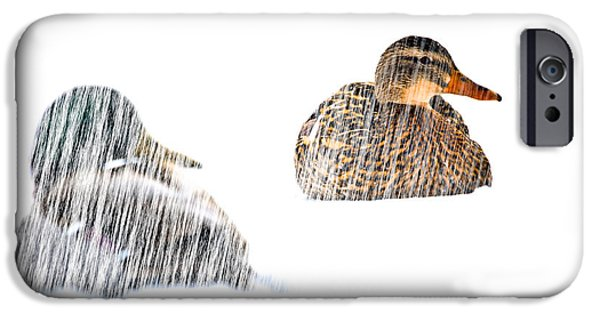 Transcendental iPhone Cases - Sitting Ducks in a blizzard iPhone Case by Bob Orsillo