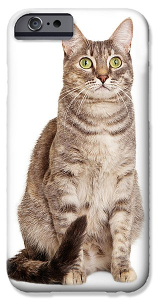 Sitting gray tabby cat iPhone Case by Susan  Schmitz
