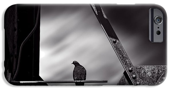Pigeon iPhone Cases - Sitting on a stick iPhone Case by Bob Orsillo