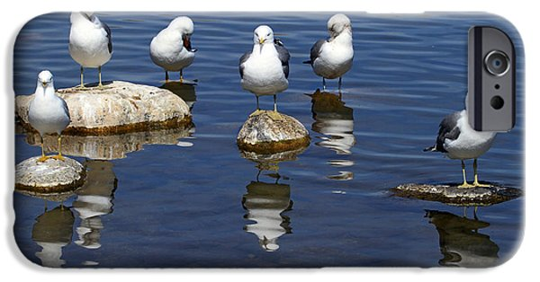 Seagull iPhone Cases - And Then There Were Six iPhone Case by Donna Kennedy