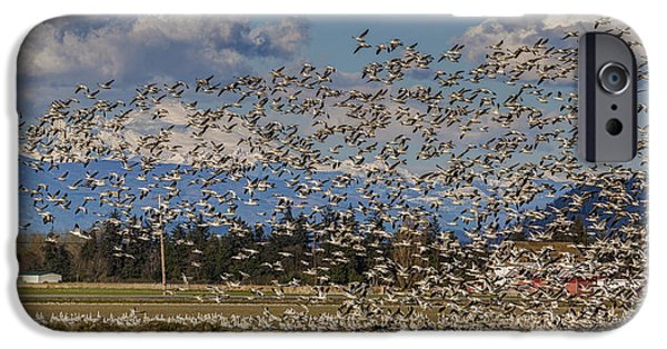 Snow iPhone Cases - Skagit Snow Geese Liftoff iPhone Case by Mike Reid