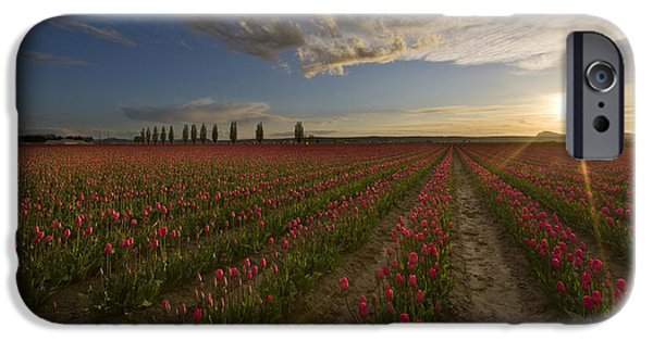 Field. Cloud Photographs iPhone Cases - Skagit Tulip Fields Sunset iPhone Case by Mike Reid