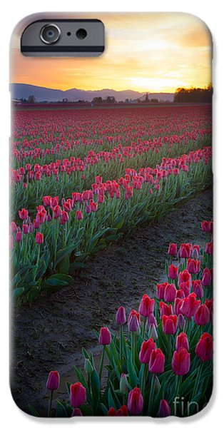Agricultural iPhone Cases - Skagit Valley Blazing Sunrise iPhone Case by Inge Johnsson
