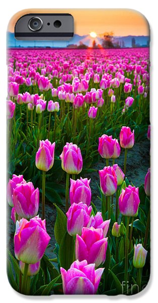 Blossom iPhone Cases - Skagit Valley Dawn iPhone Case by Inge Johnsson