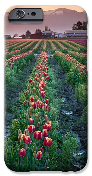 Agricultural iPhone Cases - Skagit Valley Magic iPhone Case by Inge Johnsson