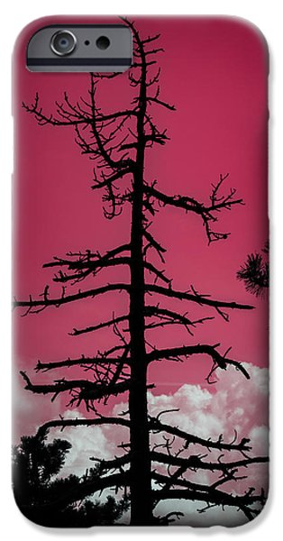 Pathway Pyrography iPhone Cases - Skeletons in the Beigua park iPhone Case by Andrea Casali