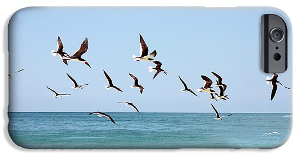 Sea Birds iPhone Cases - Skimmers and Swimmers iPhone Case by Carol Groenen