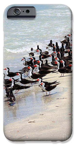 Sea Birds iPhone Cases - Skimmers on the Beach iPhone Case by Carol Groenen
