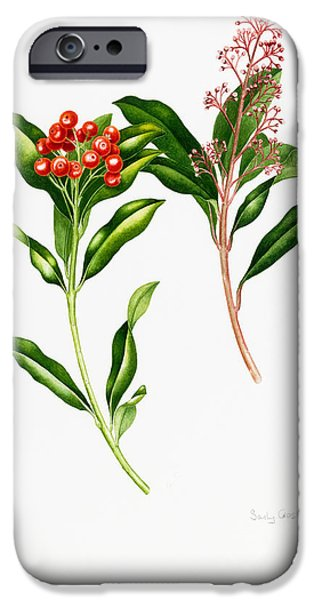 Berries iPhone Cases - Skimmia japonica iPhone Case by Sally Crosthwaite