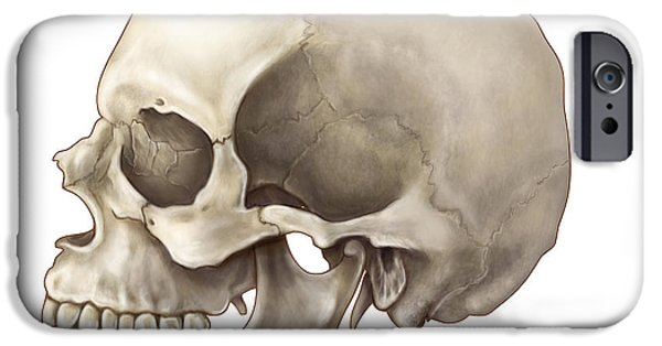Frontal Bones iPhone Cases - Skull Lateral View iPhone Case by Evan Oto