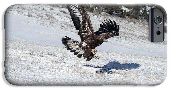 Animals Photographs iPhone Cases - Sky Dancer iPhone Case by Wildlife Fine Art