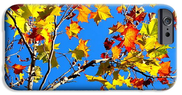 Autumn iPhone Cases - Sky Fiesta III iPhone Case by Samantha Glaze