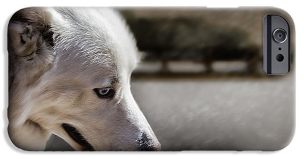 Huskies iPhone Cases - Sled Dog iPhone Case by Bob Orsillo