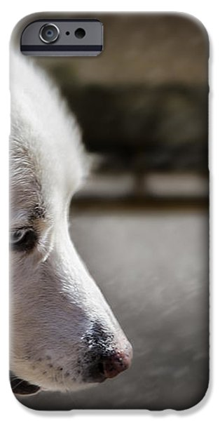 Sled Dog iPhone Case by Bob Orsillo