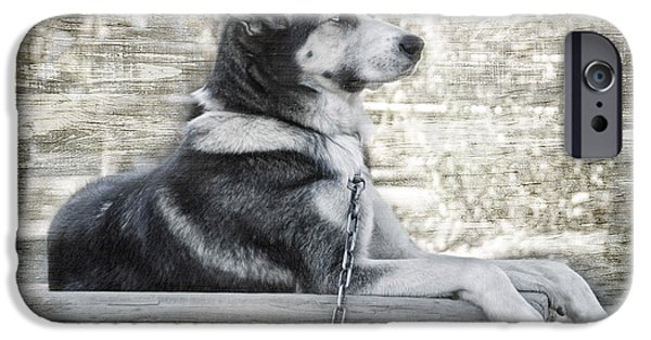 Huskies iPhone Cases - TUYA - Sled Dog of Denali iPhone Case by Dyle   Warren