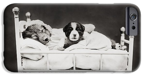 Black Dog iPhone Cases - Sleep Over iPhone Case by Aged Pixel