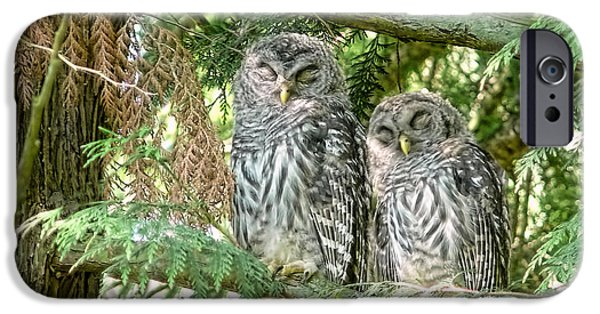 Barred Owl iPhone Cases - Sleeping Barred Owlets iPhone Case by Jennie Marie Schell