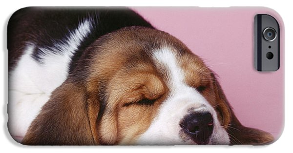 Dog Close-up iPhone Cases - Sleeping Beagle Puppy iPhone Case by John Daniels