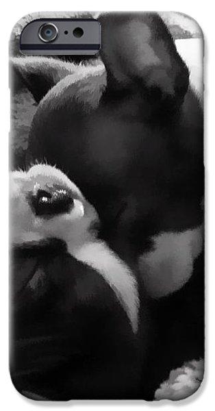 Sleeping Beauties - Boston Terriers iPhone Case by Jordan Blackstone