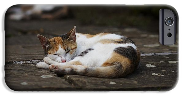 Animal Cards Pyrography iPhone Cases - Sleeping cats iPhone Case by Victor Georgiev