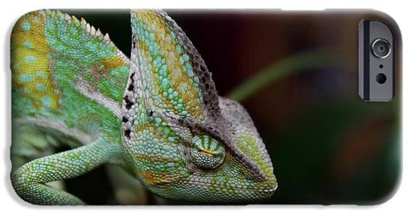 Chameleon iPhone Cases - Sleeping Chameleon  iPhone Case by Mountain Dreams