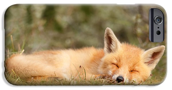Innocence Photographs iPhone Cases - Sleeping Cuty _ Red Fox Kit iPhone Case by Roeselien Raimond