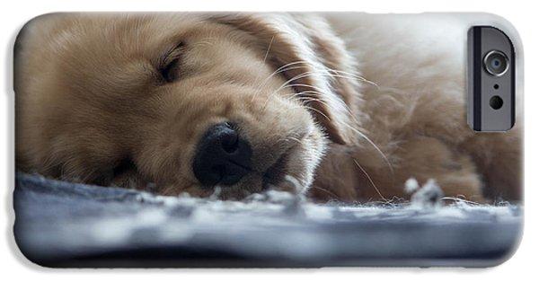 Puppies iPhone Cases - Sleeping Golden Retriever Puppy iPhone Case by Hayden Deveaux