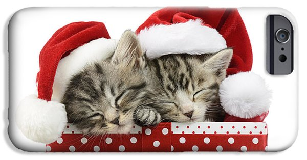 Christmas Eve iPhone Cases - Sleeping Kittens In Presents iPhone Case by Greg Cuddiford