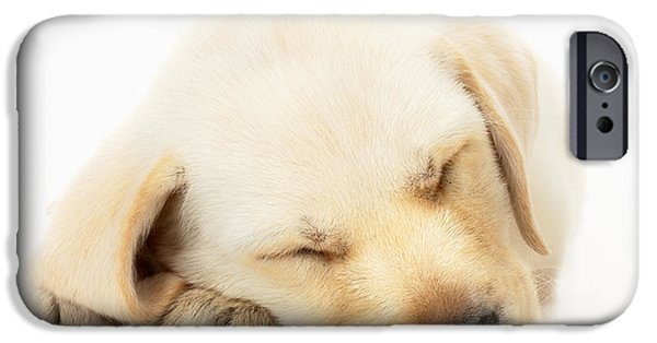 Innocence Photographs iPhone Cases - Sleeping Labrador Puppy iPhone Case by Johan Swanepoel