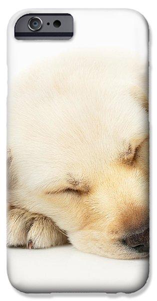 Sleeping Labrador Puppy iPhone Case by Johan Swanepoel