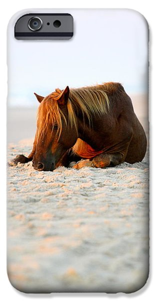 Horse iPhone Cases - Sleeping Marley iPhone Case by Megan Boals
