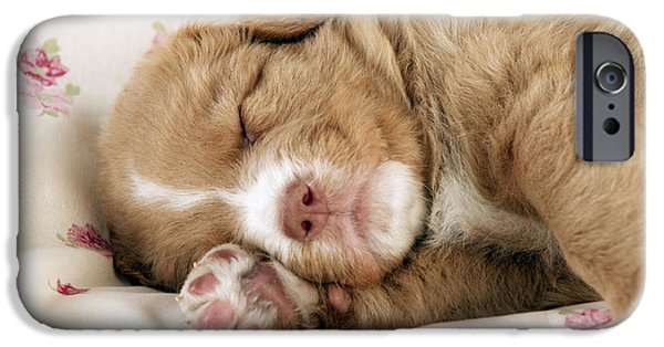 Dog Close-up iPhone Cases - Sleeping Puppy Dog iPhone Case by John Daniels