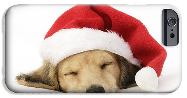 Christmas Eve iPhone Cases - Sleeping Santa Puppy iPhone Case by Greg Cuddiford
