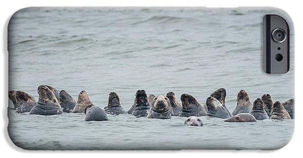 Ocean Mammals iPhone Cases - Sleeping Seals iPhone Case by Bill  Wakeley