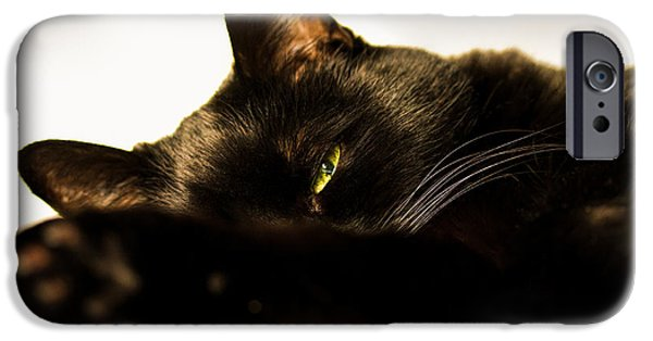 Bob Cats iPhone Cases - Sleeping with one eye open iPhone Case by Bob Orsillo