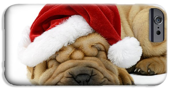 Christmas Eve iPhone Cases - Sleeping Xmas Pup iPhone Case by Greg Cuddiford
