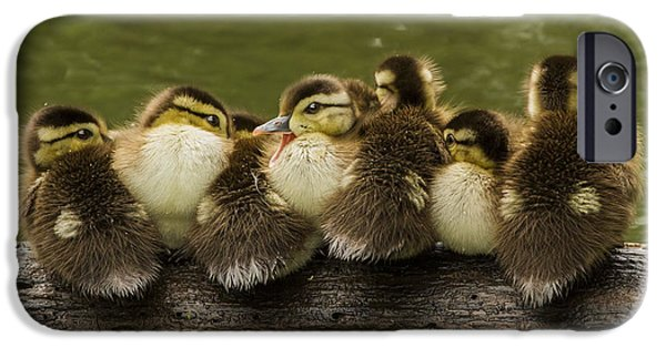 Baby Bird iPhone Cases - Sleepy Babies iPhone Case by Mircea Costina Photography