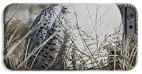 Snowy Pyrography iPhone Cases - Sleepy iPhone Case by Bill Zajac