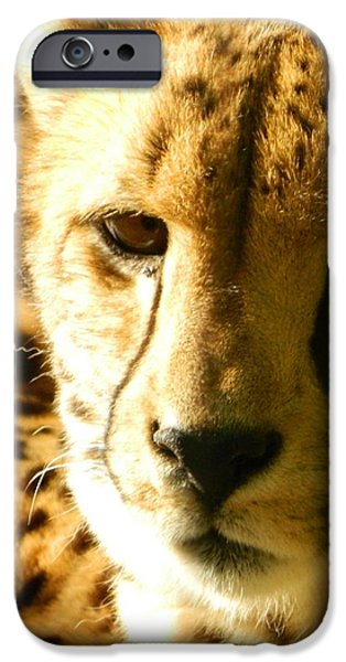 Cheetah Digital Art iPhone Cases - Sleepy Cheetah Cub iPhone Case by Emmy Marie Vickers