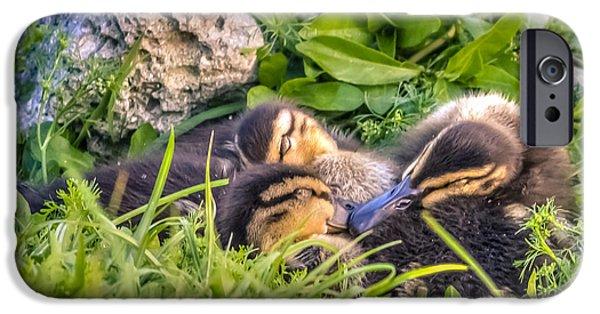 Bonding iPhone Cases - Sleepy Ducklings iPhone Case by Rob Sellers