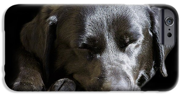 Black Dog iPhone Cases - Sleepy In The Spotlight iPhone Case by Linsey Williams